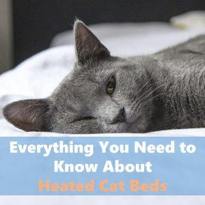 Heated cat beds are feline favorites