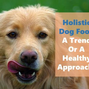 Holistic dog food is a new trend in canine nutrition