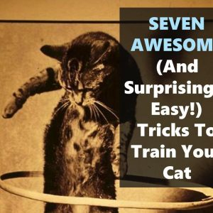 Seven easy cat tricks to teach your cat