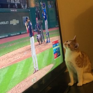 Kira the cat trying to catch a baseball from the TV during the 2016 World Series