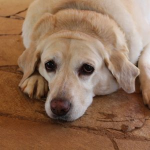 Low-fat dog foods keep your pup looking trim