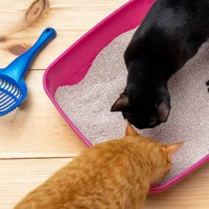 Litter for multiple cats keeps peace within a household