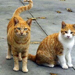 Orange cat names have a lot of unique possibilites