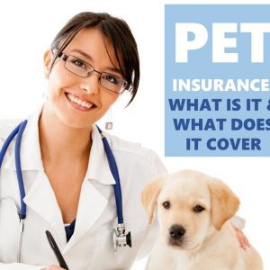 Pet Insurance is important for every animal