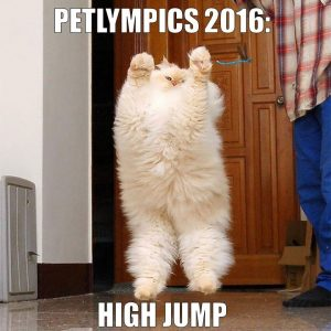 Why watch the Olympics if you can host the Petlympics at home?