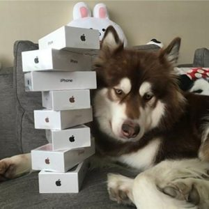 A dog with eight iPhones?