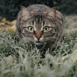Tabby cat names allow you to explore plenty of creativity