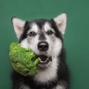 Vegan dog treats are great ways to introduce fruits and vegetables