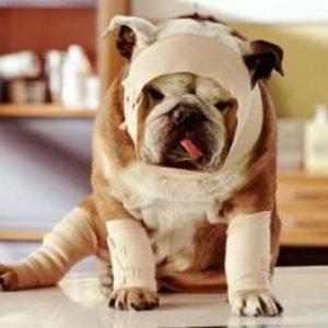 Can dogs take NSAIDs like Aspirin and Ibuprofen?