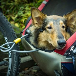 Dog bike trailers let your dog go cycling with you