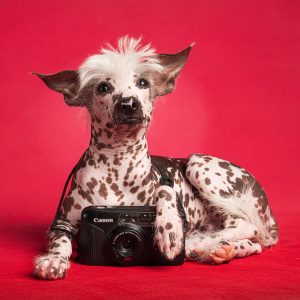 Hairless dog breeds work well for some people with allergies