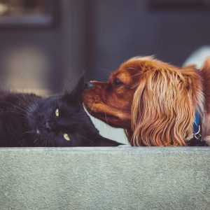 Dog breeds for cats aren't impossible to find