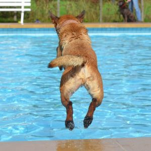 Dog swimming pools are the perfect summer accessory