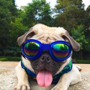 Doggles help keep your pup's eyes safe