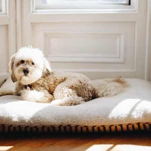 Washable dog beds keep your home smelling fresh