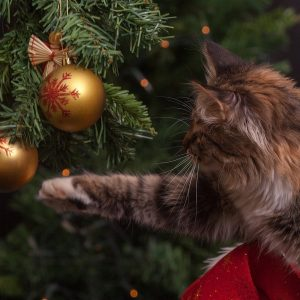 How to keep cats away from the Christmas Tree
