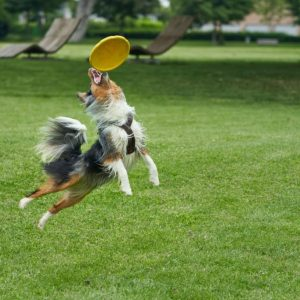 Dog frisbees span play and training